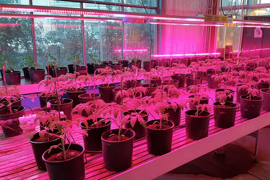 Lampade a led per growing la luce giusta per le piante c led