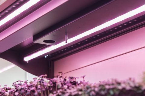 Illuminazione led per la coltivazione indoor c led