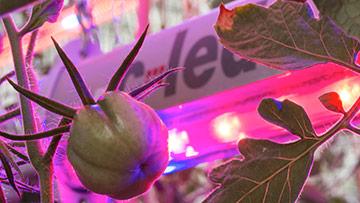 Interlight una luce ad alta prestazione per le piante in serra