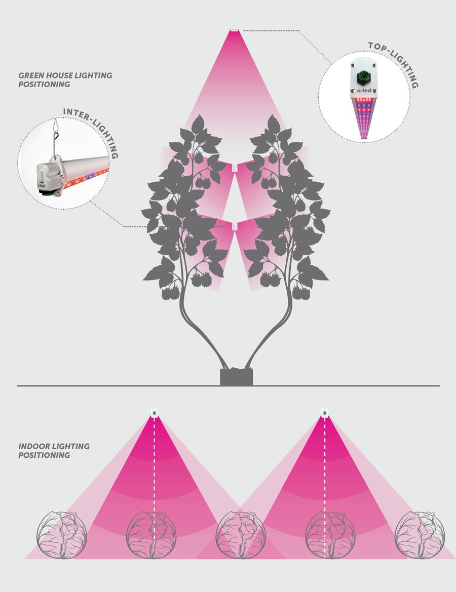 SMALL FRUITS (es. blackberries raspberries etc.) INTER LIGHT  sc 1 st  C-LED & Greenhouse growing - c-led